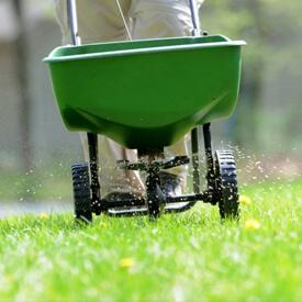 Kaip sodinti naują veją?